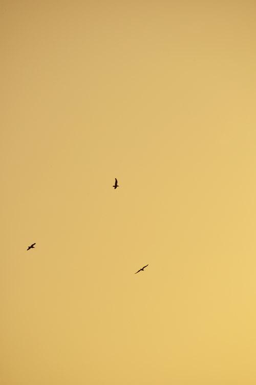 fotos-sunset-manu-bermudez-fotografo-portafolio