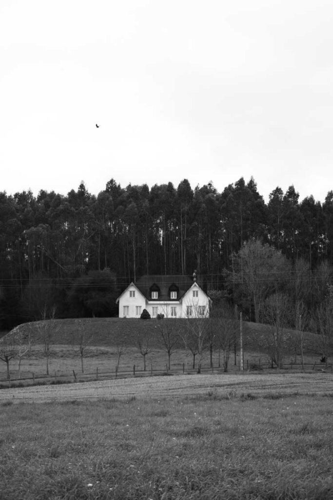 casas-en-el-bosque